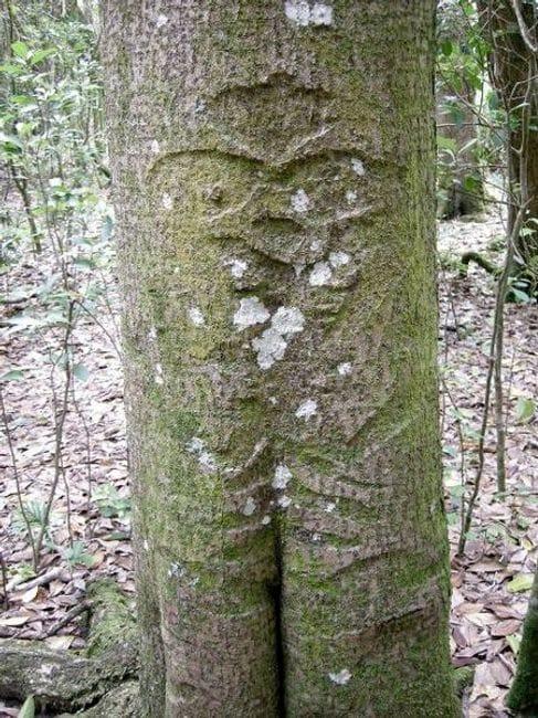 Jm barker hapupu historic reserve