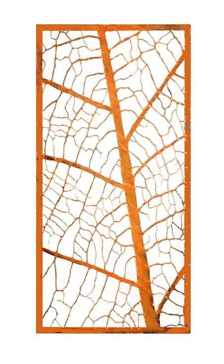 Leaf Vein Screen