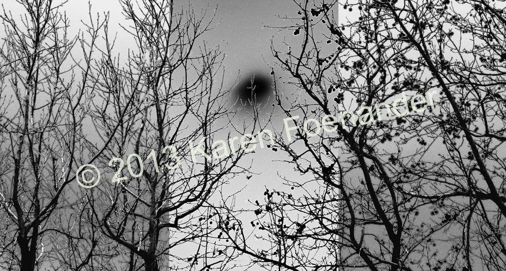 Trees in Black and White - Karen Foenander