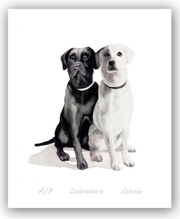 Labradors - Valerie
