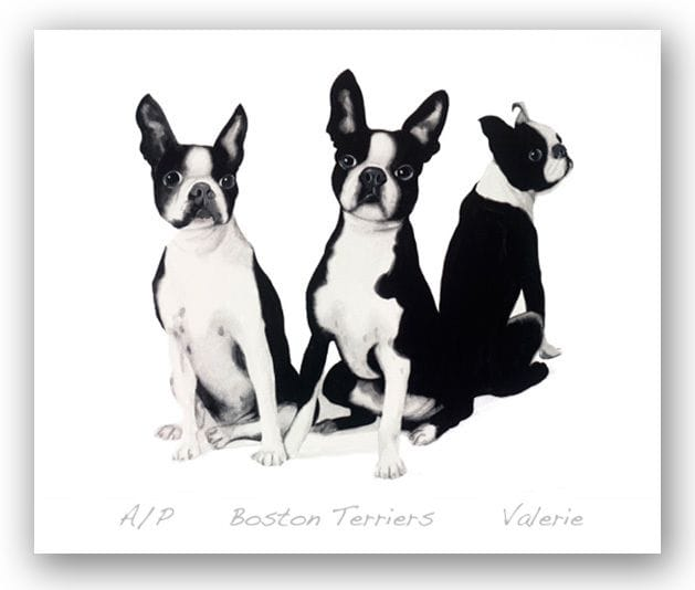 Boston Terriers - Valerie