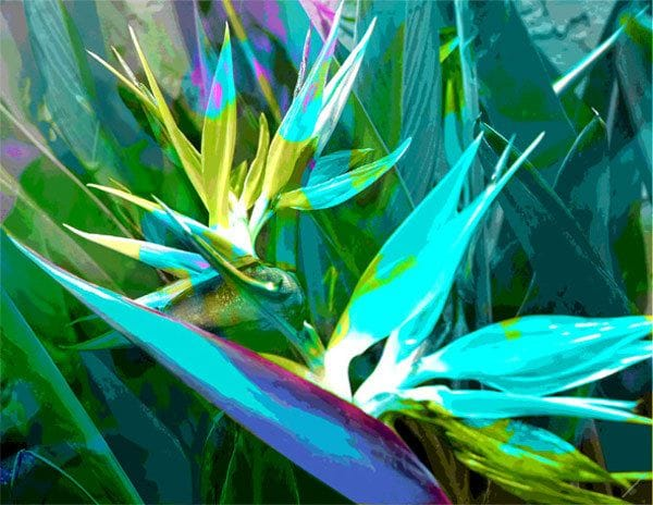 Bird of Paradise Blue - Jan Neil