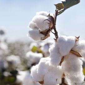 COTTON COVERS COAST WITH $1M
