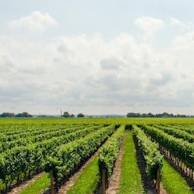 PIONEERING AUSTRALIAN WINE MAKING ITS WAY TO CHINA
