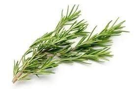 Herbs Rosemary bunch