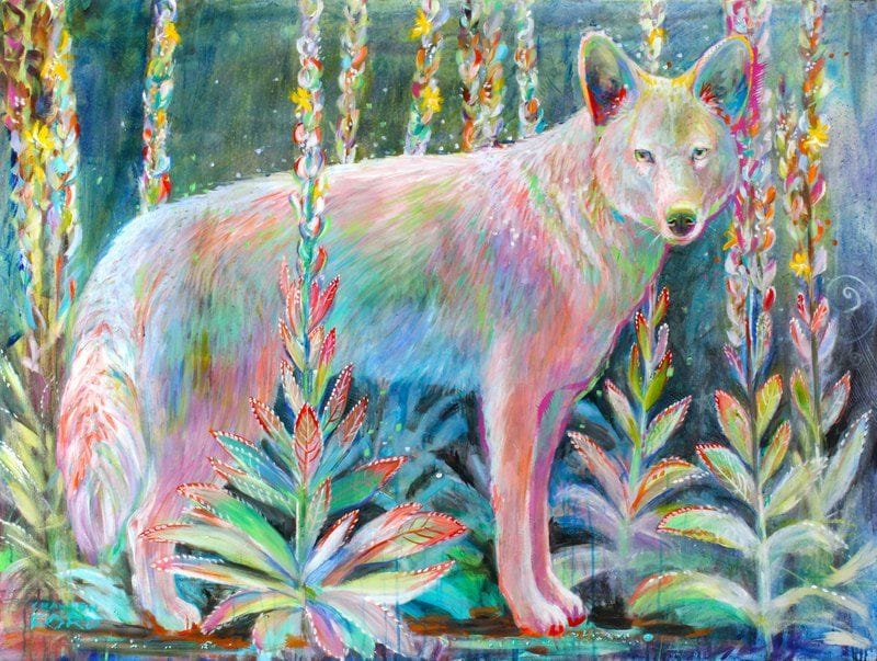 Coyote in the Mullien