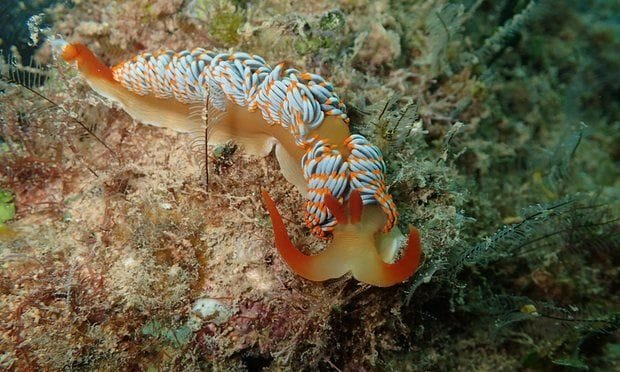Sluggy McSlugface no more: sea slug named for fly-in, fly-out mining workers