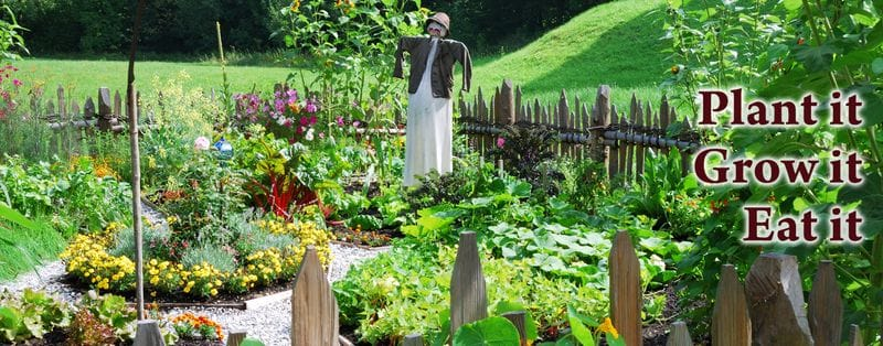 Commit more space to your Urban Food Garden