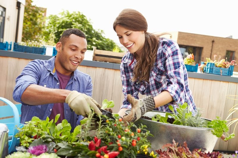 Veggie gardens for apartment owners