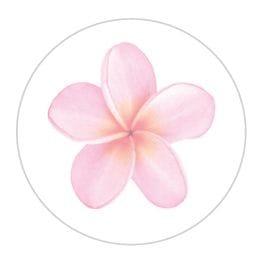 Seal | Pink Frangipani | 12 pk