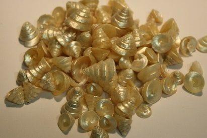 Bulk | Shells | Pearly Cones 1kg