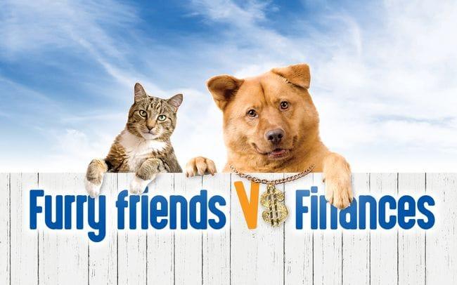 Furry Friends vs Finances