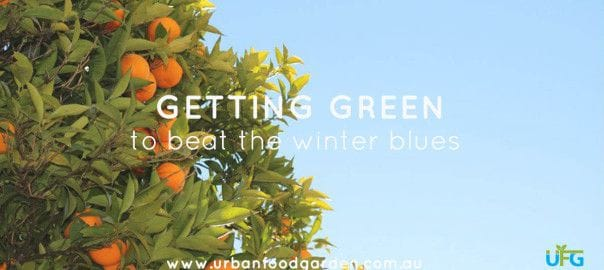 GETTING GREEN TO BEAT THE WINTER BLUES