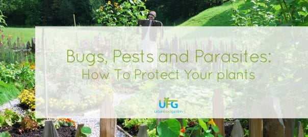 Bugs, Pests & Parasites - How To Protect Your Plants