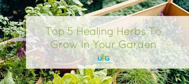 Top 5 Healing Herbs To Grow In Your Garden